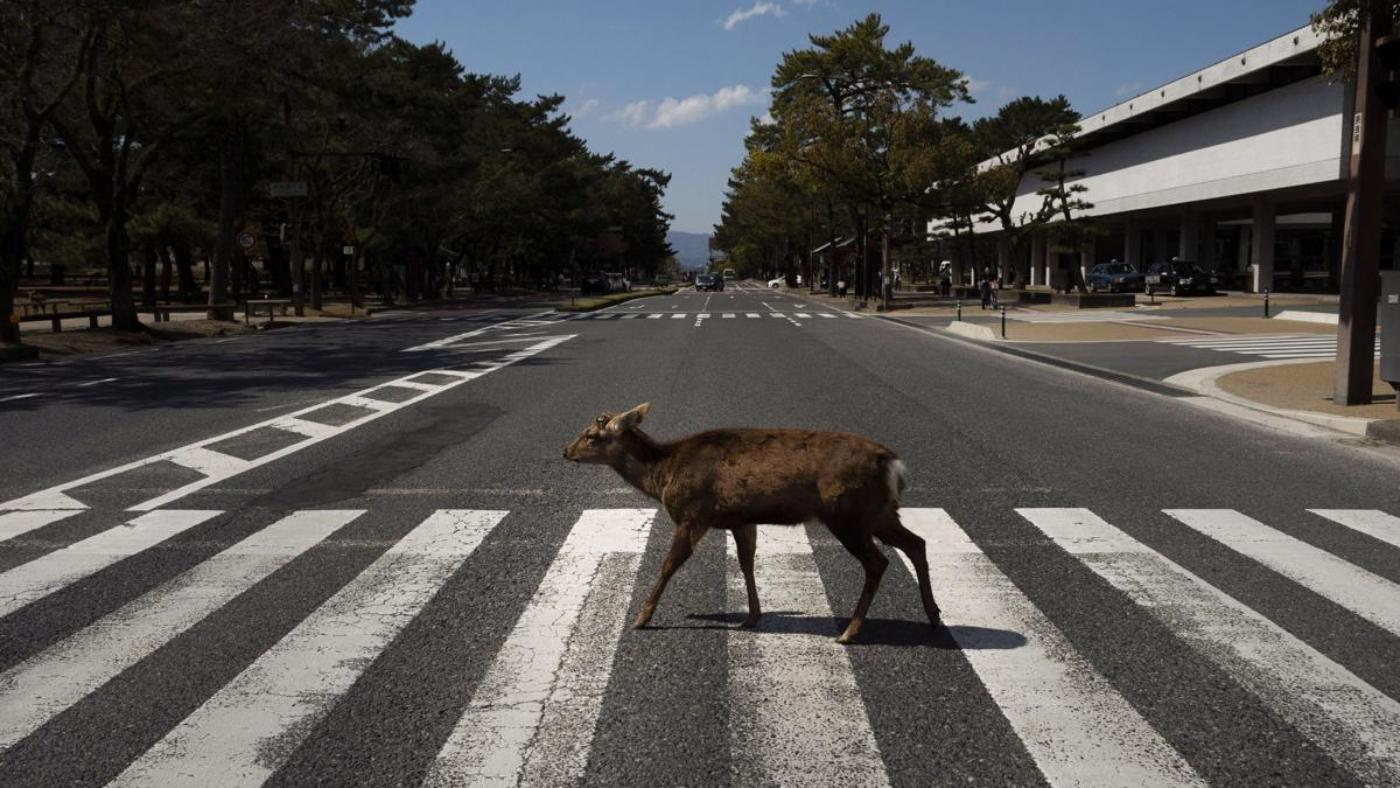 portada-covid-wild-animals
